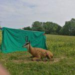 Bogenparcours Abenteuer Bogenschießen Schlichemtal