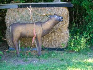 Hirsch mit Bogen auf einem Bogenparcours