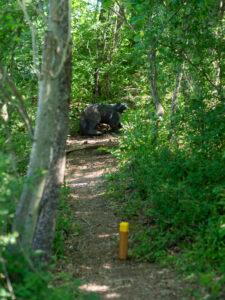 Plock mit 3D Ziel im Wald.