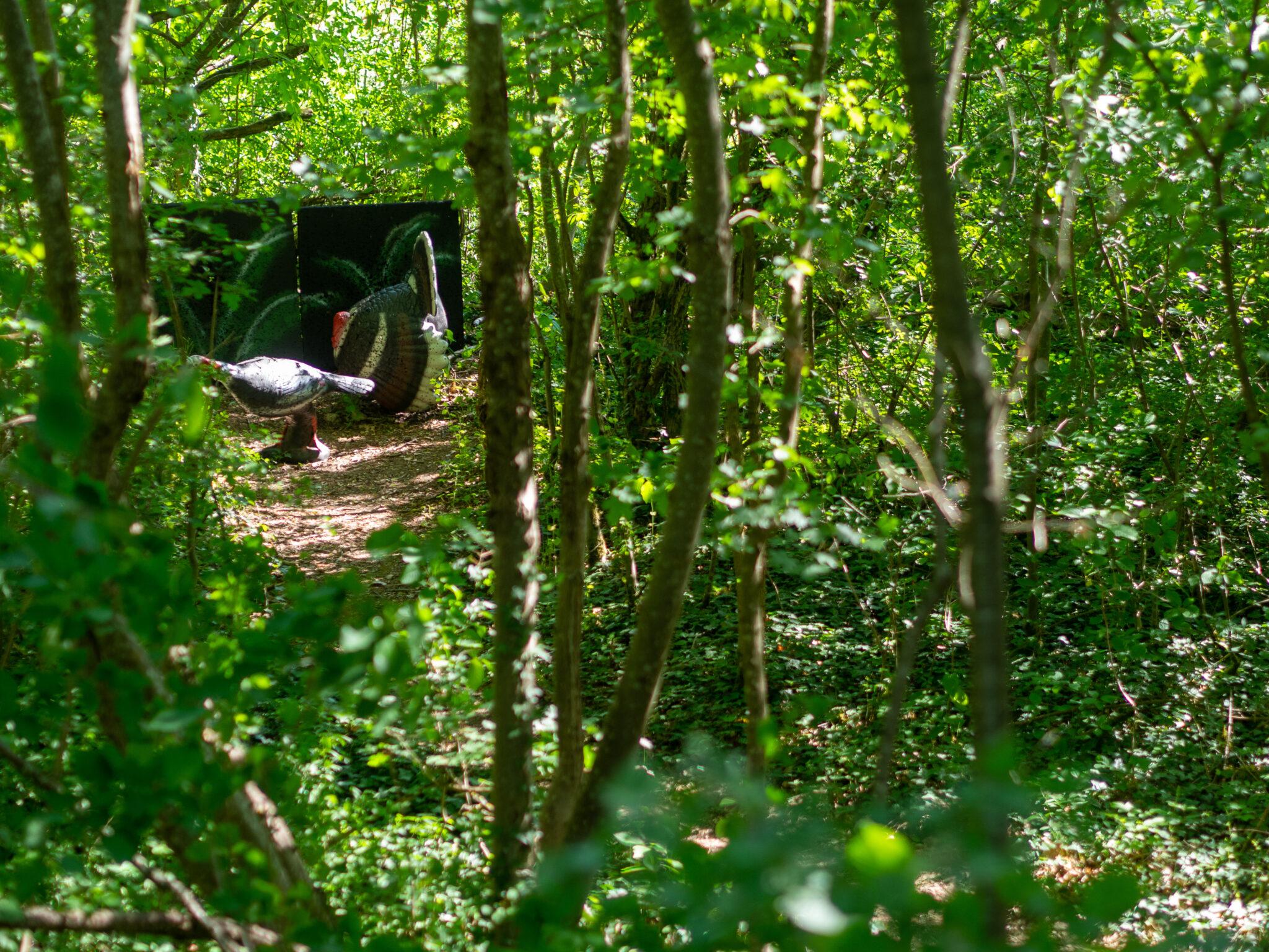 Wald mit Ziel auf einem Bogenparcours
